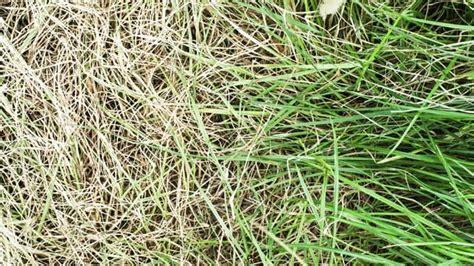 Ameisen Im Geschirrspüler by Wie Gelber Rasen Wieder Sch 246 N Gr 252 N Wird
