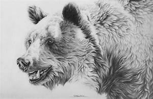 10+ Bear Drawings Showcase 2017
