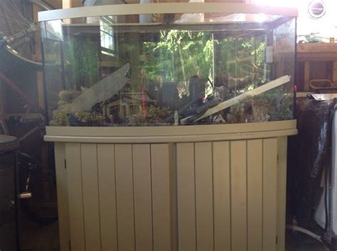 gallon bow front aquarium craigslist