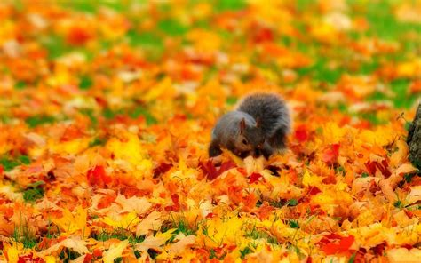 Autumn Animal Wallpaper - fall with animal wallpaper hd 4016 amazing wallpaperz