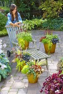 Pflanzen Kübel : willkommen herbst dekorative pflanzen f r beet k bel und ~ Pilothousefishingboats.com Haus und Dekorationen