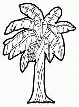 Coloring Tree Kapok Banana Sheet Popular sketch template