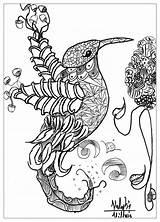 Dessin Animaux Oiseaux Coloriage Adulte Coloriages Par Valentin Adultes sketch template