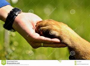 Dog paw and man hand stock image. Image of outdoors, mans ...