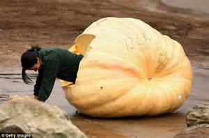 Elephants scoff record-breaking pumpkins from Sydney Royal ...