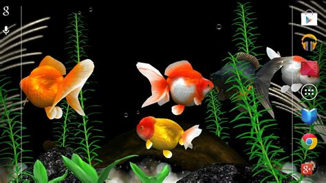 Animated Goldfish Wallpaper - giveaway of the day gold fish animated wallpaper