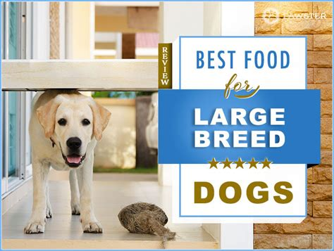 foods  feed  large breed dog