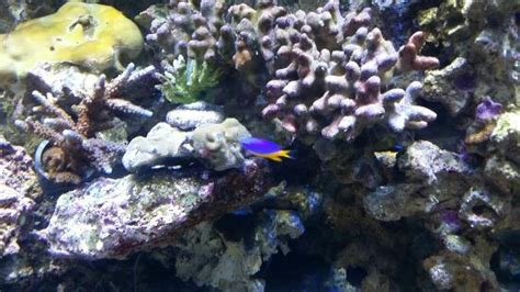 aquarium le 7eme continent avril 2015