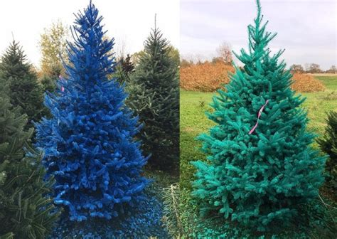 christmas tree farms upstate ny troopers seek real grinch painted christmas trees 5890
