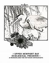 Newport Coloring Visit Bay Conservancy Cove Courtesy Crystal sketch template