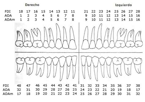 es odontograma facilpedia