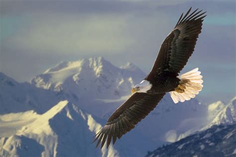 syari aquila fly so high soar higher higher touch the sky