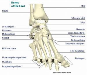 Tg - F U0026a Anatomy