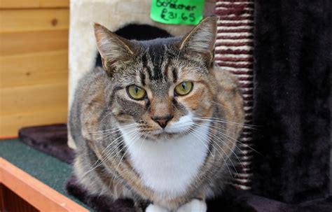 Sconzani The Year Of The Cheshire Cat