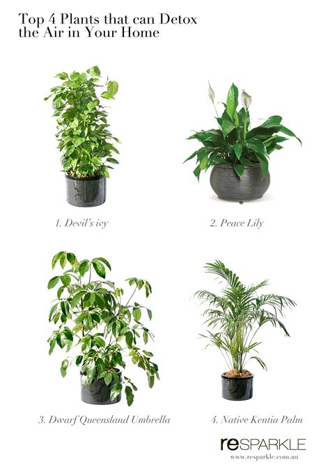 interior log homes top 4 plants that can help detox indoor air at home