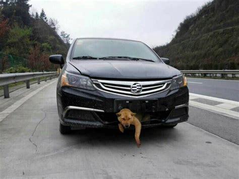 im auto hunde im auto was beim transport zu beachten ist autozeitung de