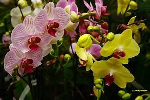 Schöne Orchideen Bilder : sch ne orchideen foto bild pflanzen pilze flechten bl ten kleinpflanzen orchideen ~ Orissabook.com Haus und Dekorationen