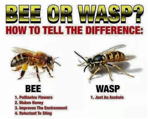 bee  wasp funny pictures funny bees wasps