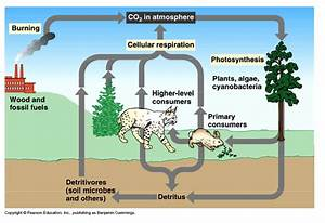 Plant Respiration Diagram, Plant, Free Engine Image For ...