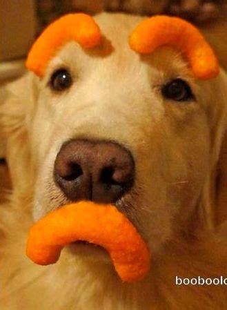 pets  hilarious facial features