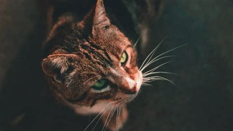 how to stop cats from shedding best brush for cat shedding 2018 reviews buyer s guide