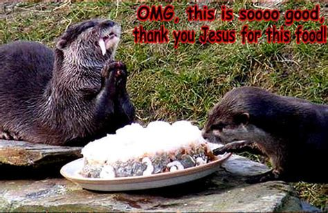 animal humor images otter funny hd wallpaper