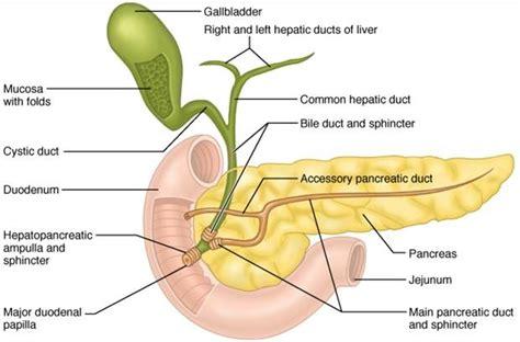le si鑒e de i disturbi pancreas più comuni e le cure migliori