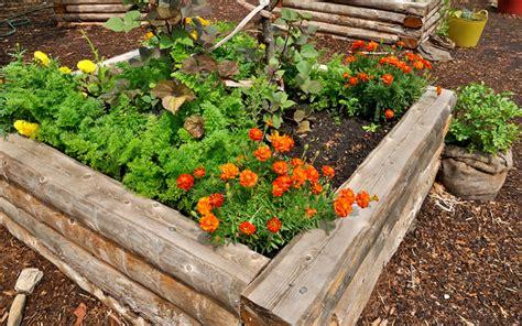 plants for garden beds 15 raised wooden garden bed designs garden lovers club