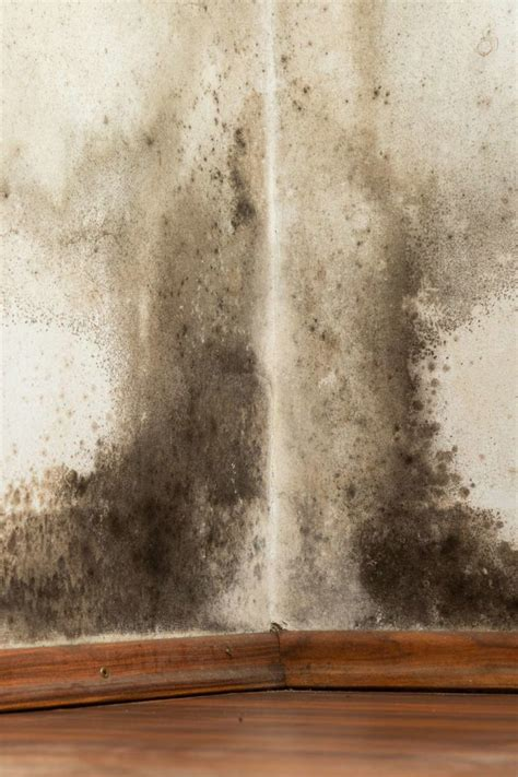 Black Mold Exposure Symptoms Treatment And Prevention