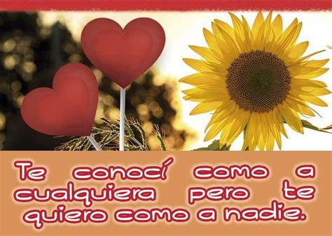 Frases de amor con girasoles for Android APK Download