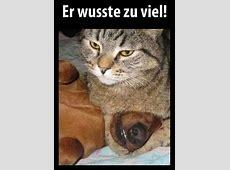 Katze claralottiluth