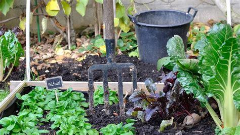 Garten Für Faule Zeit Sparen Mit Sträuchern Und