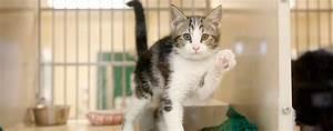 Maddie's Pet Project | Maddie's Pet Adoption Days
