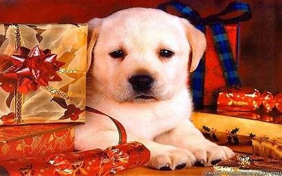 Christmas Dog Puppy Wallpapers Dogs Widescreen Res