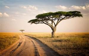 serengeti, park, tanzania, savannah, two, lonely, trees, , dry