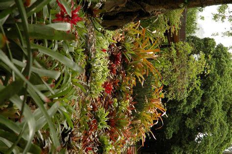 bromeliads australia nursery frangipani companions