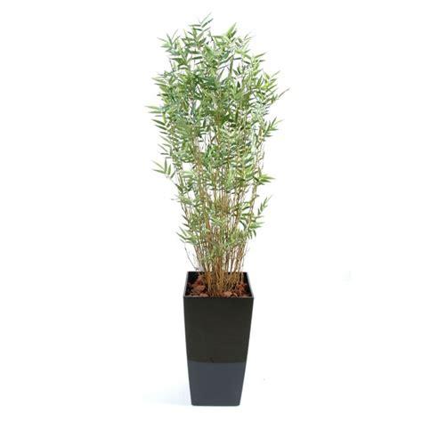 bambou semi naturel en pot kubis