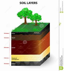 Draw Diagramof Soil Profile And Describe Its Important