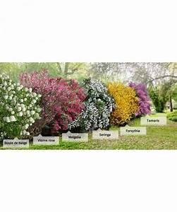 photo collection 39la haie des quatre saisons39 6 arbustes With decoration d un petit jardin 15 boule de neige plante en ligne