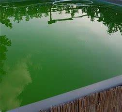Poolwasser Ist Grün : poolwasser ist gr n was tun anleitung f r einen pool ~ Watch28wear.com Haus und Dekorationen