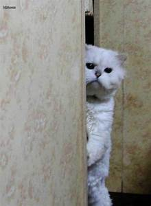 Sneaky Cat | Funny Pictures 78 Pic# 16