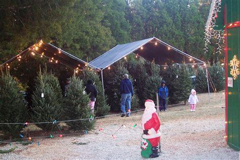 28 christmas trees sugarland tree farm it s