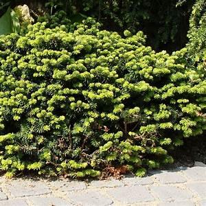 Arbustes Décoratifs à Fleurs : arbuste devant maison ~ Premium-room.com Idées de Décoration