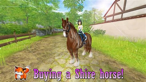 stable shire star horse buying