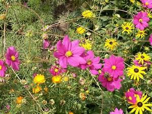 Summer flower garden flowers for Garden flower