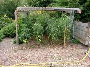 Tomaten Rankhilfe Selber Bauen : garten anders ende august tomaten brauchen ein dach krautf ule braunf ule und anderes ~ A.2002-acura-tl-radio.info Haus und Dekorationen
