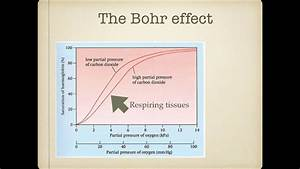 As Level  G 6 Transport Of Carbon Dioxide And Bohr Effect