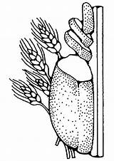 Brot Colorear sketch template