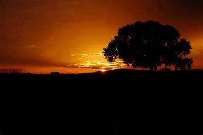 Night Tree Shadow Wallpapers Backgrounds Wallpaperaccess