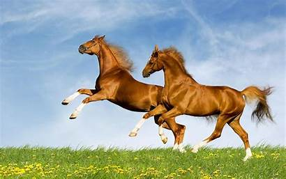 Wallpapers Horse Actresses Unknown Posted